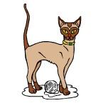 Раскраска Породы кошек